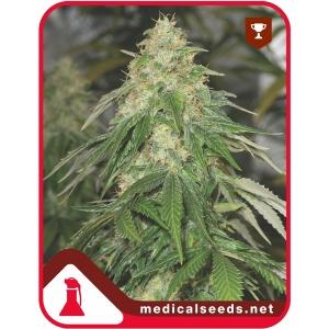 Some Sweet 3uds Medical Seeds